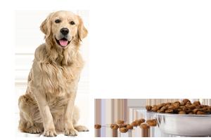 Hrană animale